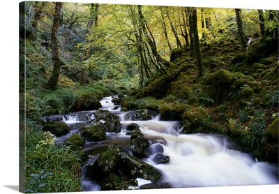 Autumn Woodland And Stream, Glenveagh National Park, County Donegal, Ireland