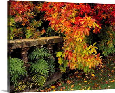 Balustrades and Autumn Colours, Castlewellan, Co Down, Ireland