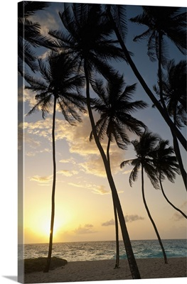 Barbados, Silhouette of palm trees at dawn, Bottom Bay