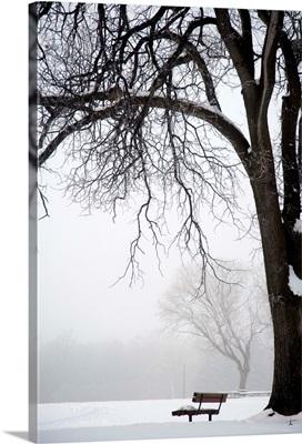Bare Tree And Park Bench In Winter, Assiniboine Park, Winnipeg, Manitoba, Canada