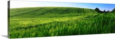 Barley, County Down, Ireland