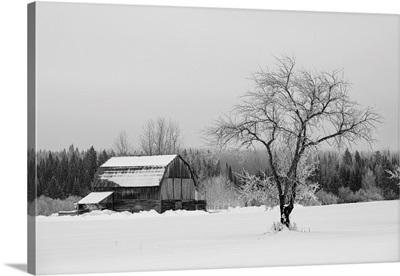 Barn With Tree In Winter, Thunder Bay, Ontario, Canada