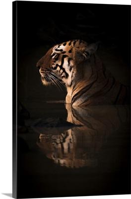 Bengal Tigress, India