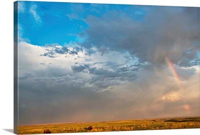 Bison Under A Passing Storm In Grasslands National Park, Saskatchewan
