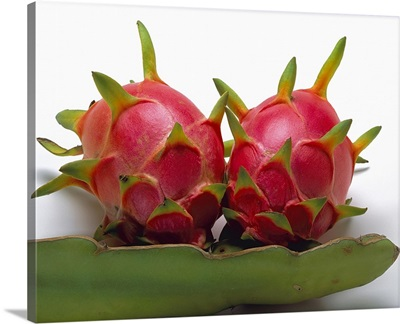 Blossom of the Climbing Cactus, (Hylocereus), a cactus fruit grown in Mexico