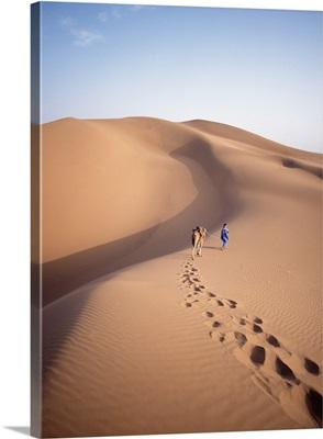 Blue Man, Leading Camel Through The Dunes At Dawn