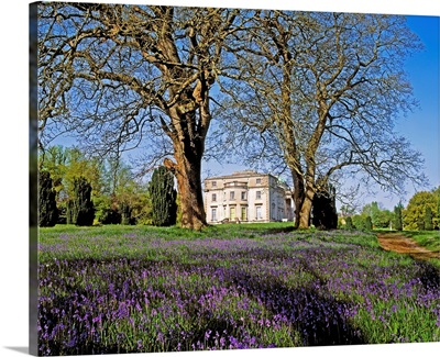 Bluebells In The Pleasure Grounds, Emo Court, Co Laois, Ireland