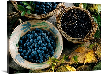 Blueberries and Bilberries in bowls and baskets on a rock and moss surface