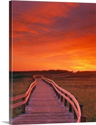 Boardwalk Along The Salt Marsh, New Brunswick, Canada