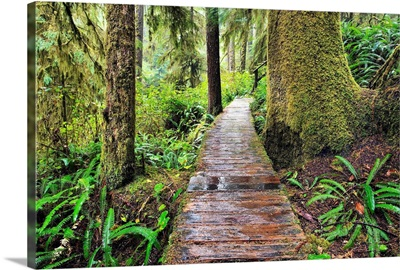 Boardwalk On The Rainforest Trail In Pacific Rim National Park, Canada