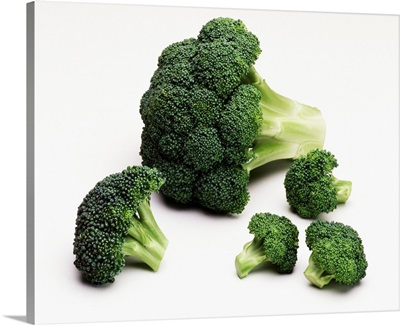 Broccoli crown, and large and small florets