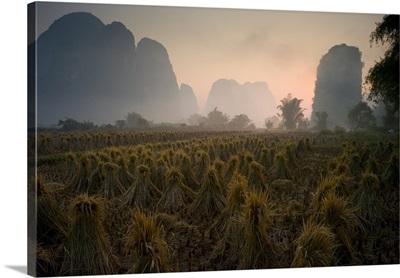 Bundles In Mountain Area, Yangshuo, China