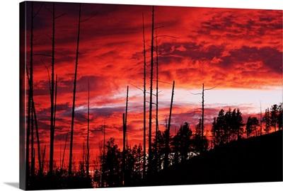 Burnt Trees Against A Sunset