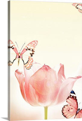 Butterflies And Tulips