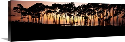 California, Spanish Bay, Line Of Trees On Shoreline Silhouetted At Sunset