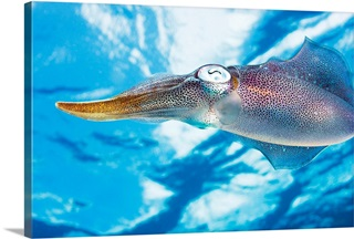 Art print POSTER CANVAS A Squid Swims in the Red Sea at Night