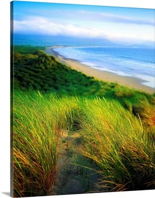 Castlegregory Sandunes, County Kerry, Ireland
