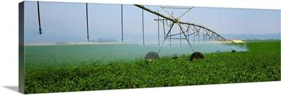 Center pivot irrigation of a mid growth potato field, Eastern Idaho