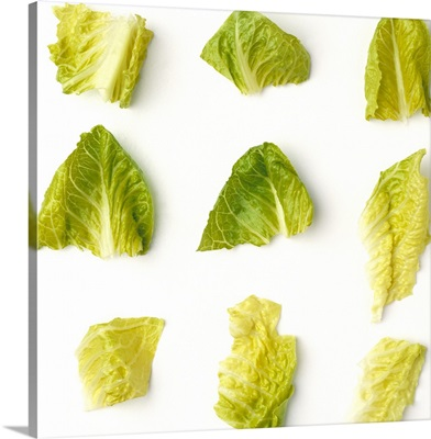 Chopped Romaine lettuce pieces