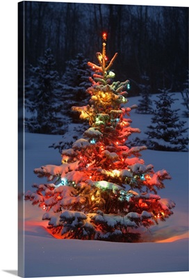 Christmas Tree With Lights Outdoors In The Forest