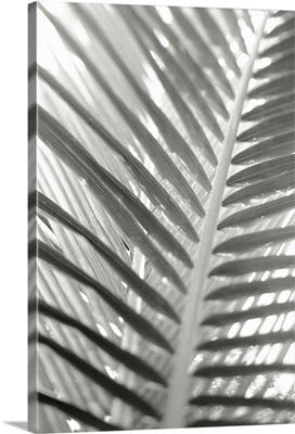 Close-up detail of coconut palm fronds, Selective focus