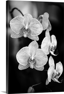 Close-up of a branch of orchids
