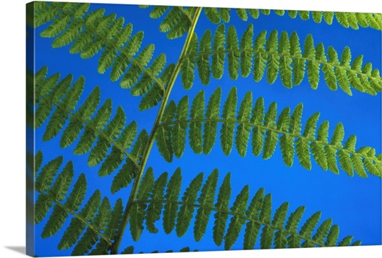 Close-Up Of A Fern Wall Art, Canvas Prints, Framed Prints, Wall ...
