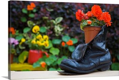 Close-Up Of Shoe Planter In Garden, Glengarriff, County Cork, Ireland