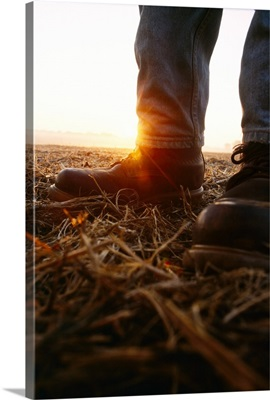 Closeup of a farmer's boots in a field of soybean stubble with the sunrise behind