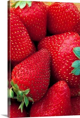 Closeup of harvested strawberries, California