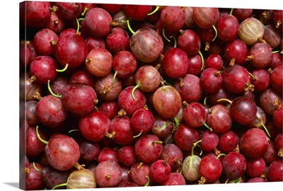Closeup of sweet gooseberries, Yamhill County