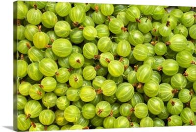 Closeup of tart gooseberries, Yamhill County
