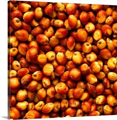 Closeup view of harvested grain sorghum (milo) kernels