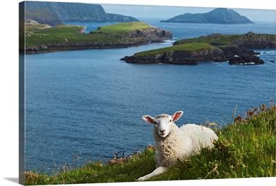 Coast near Portmagee, Ring of Kerry, County Kerry, Ireland