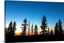 Colourful twilight sky with a row of evergreen trees, Elkwater, Alberta, Canada
