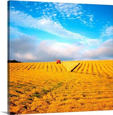 Combine Harvesting, Wheat, Ireland