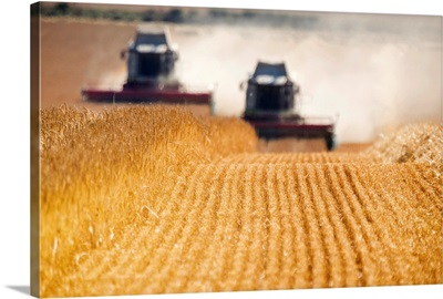 Combines Harvesting Field, North Yorkshire, England