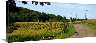 Corn field, Dunham, Quebec, Canada