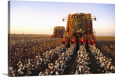Cotton Harvesting, San Joaquin Valley, California