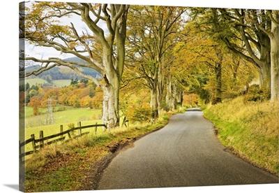 Country Road In Autumn, Scottish Borders, Scotland