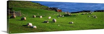 County Cork, Beara Peninsula