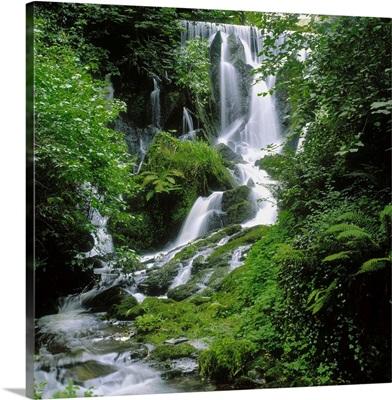 Crawfordsburn Country Park, Co Down, Ireland