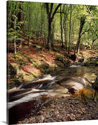 Creek In Woods, Cloughleagh, County Wicklow, Ireland
