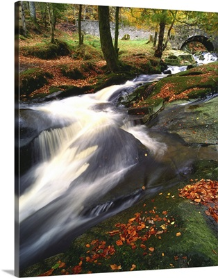 Creek In Woods In Autumn, Sally Gap, County Wicklow, Ireland