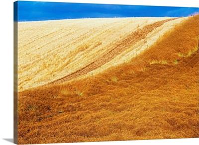 Crops, Oil Seed Rape