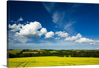 Cumulus Clouds Over Canola Field In Bloom, Prince Edward Island, Canada