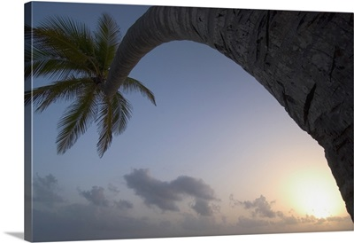 Curved Palm Tree At Sunset; Dominican Republic