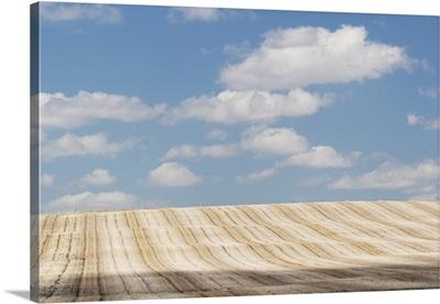 Cut Brown Field With Clouds In The Sky, Alberta, Canada