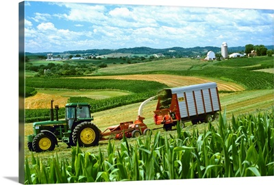 Cutting and windrowing alfalfa next to corn, contour strip farming, Wisconsin