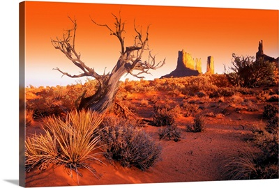 Dead Tree In Desert Monument Valley, United States Of America